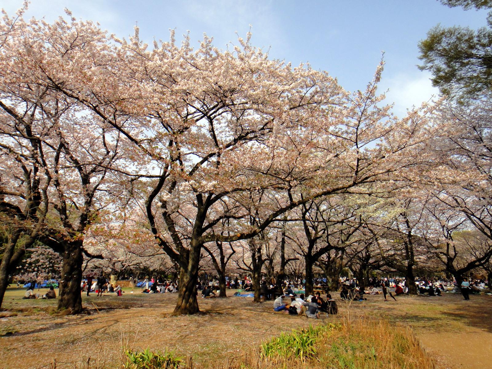 そろそろお花見バーベキューの段取りを。大阪市内で可能な場所、あります。