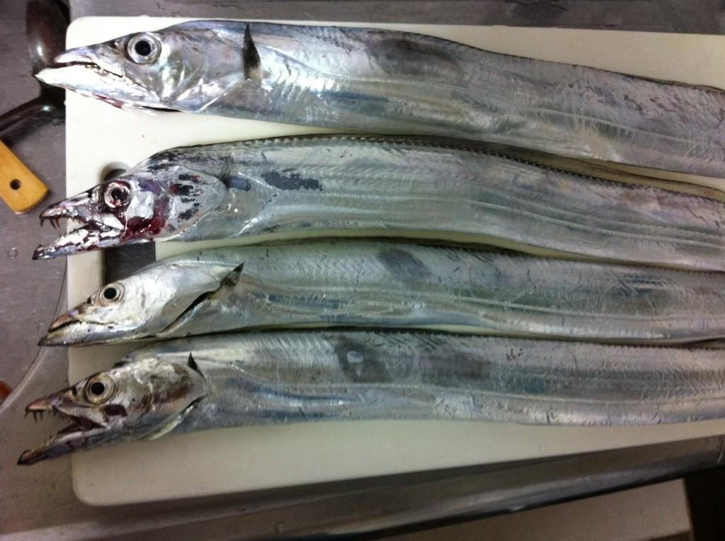 大阪湾 タチウオ釣りのポイント紹介