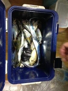 【釣行記】六目釣り達成in南港コスモスクエア