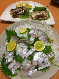 しつこく太刀魚in丸高渡船